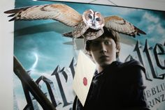 Your very own Hogwarts Mail Delivery Owl by Just4FunSupplies
