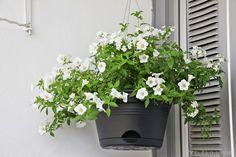 White Summer Flowers - Shhh, it's a secret!