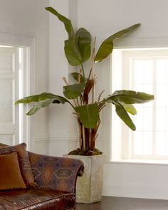 In the perfect spot, this would be sensational !!!    Natural Banana Tree by John-Richard Collection at Neiman Marcus.
