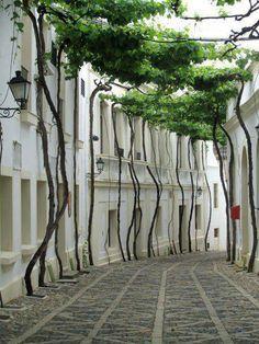 Streets of Jerez, Spain