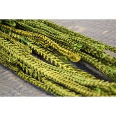 @curiouscountry posted to Instagram: ***New Greenery***  LIMITED STOCK- hurry and pick up some African Bud stalks for your floral arrangements!  Tall, unique, and a beautiful bright green color.  Order now on www.curiouscountrycreations.com.     #driedflowers #driedplants #flowerlovers #homedecor #driedflowerdesign #floraldesign #flowerarrangement #diyhomedecor #diycrafts #flowers #plantlove #flowerstalking #flowershop #weddingflowers #plantstagram #africanflower #african #greenery #flowers #gre