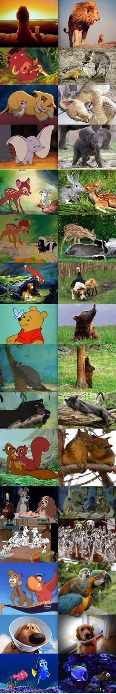 Disney and real animals, love the fox and the hound one haha