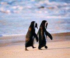 Penguins holding hands.