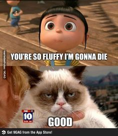 elsa grumpy cat frozen - Google Search