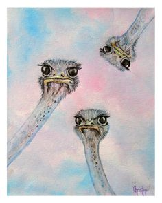 Limited Edition Prints of Curious Ostriches by ChristinesHeART