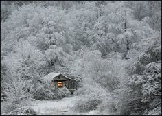 A cabin in the frozen forest.  What an experience that would be, as long as I had a great heating system in place.