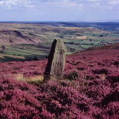 I like the standing stone amid the red heather.