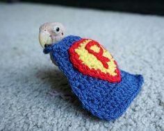 So sweet! Rhea the Naked Birdie, A Tiny Lovebird Who Lost All Her Feathers Keeps Warm in Hand Knitted Sweaters Funny Superman, Crazy Bird, Wings Design, Little Critter, Hand Knitted Sweaters, Cute Funny Animals, Keep Warm, Love Birds, Cute Art