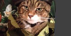 The BUBBLEWS Secret Code!by STIX the CAT - 8-01-14