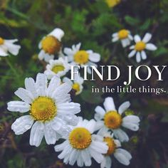 """Find joy in the little things."" It's really the little things that make a big difference! Comment something that you find joy in #lds #mormon #christian #helaman #armyofhelaman #sharegoodness #embark #joy #littlethings"