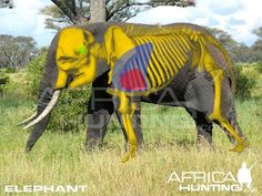 Grands gibiers africains - Le blog de Alex.bowhunter Our Planet, Save The Planet, Africa Hunting, Bow Hunter, Animal Games, Safari, Creatures, Nature, Bowhunting
