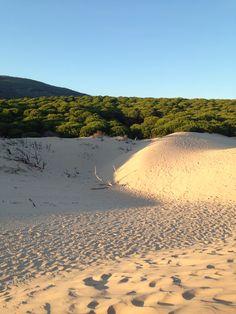 Beach bolonia