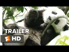 Born in China Official 'Earth Day' Trailer (2017) - Disneynature Documentary HD - YouTube