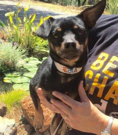 George is a 12-pound, 3-year-old male terrier mix who gets along well with other dogs. He is leash and crate trained. The $50 adoption fee helps cover spay/neuter, vaccinations, microchip, vetting, food/care and 30 days of health insurance. Call Pets Without Partners at 243-6911. Go to www.petswithoutpartners.org. Go to www.redding.com for more adoptable pets.