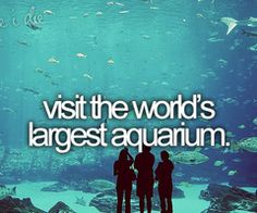 Bucket List -- visit the world's largest aquarium