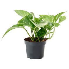 Look what I've found at IKEA - plants Leafy Plants, Potted Plants, Cactus Plants, Indoor Plants Online, Plants Indoor, Ikea Plants, Luz Solar, Outside Plants, Lights
