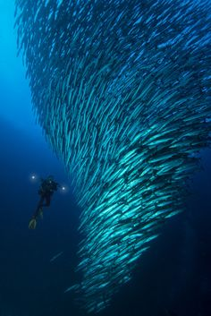 The tornado by HendroHioe can not be denied how small we are compared to the universe. a diver among the barracuda vortex like a tornado forming in East Borneo (Indonesia)