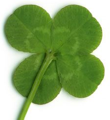 My 4 leaf clover! must remember to get this laminated or set in silver or something so I can keep it on me in performance for luck!