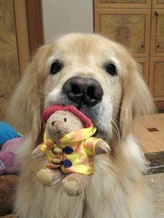 AWWWW.........cute dog