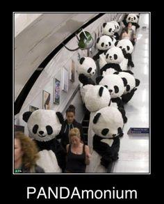 Pandas !!!!