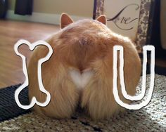 Little late for Valentines Day, but the message still resonates. Love Corgis.