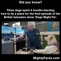 The British tv show, Dogs Might Fly. Four dogs spent months on a flight simulator LEARNING HOW TO FLY ! Enjoy RUSHWORLD boards, LULU'S FUNHOUSE, BARK RUFFINGTON'S DOG KINGDOM and DOGS DRIVING CARS.  Follow RUSHWORLD! We're on the hunt for everything you'll love! #BarkRuffingtonsDogKingdom #LulusFunhouse #FunnyDogs
