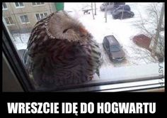Funny lol -- I'm going to Hogwarts Daily Funny jokes Funny Animal Pictures, Funny Animals, Cute Animals, Baby Animals, Really Funny, Funny Cute, Animal Memes, Animal Funnies, Animal Facts