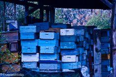 Boxes by Vero Attala