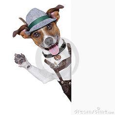 jack russelel honden afbeeldingen | Oktoberfest Dog Royalty Free Stock Photo - Image: 32175315