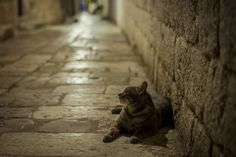 One of the Guardians by Liviu Pascalau on 500px