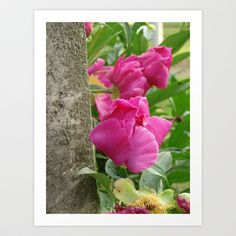 Peonies and Old Stone Art Print by Cassie Peters - $13.52