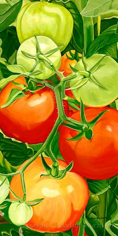 """""""Tomato/Tomahto"""" by Marlane Wurzbach. All rights reserved. Watercolor Food, Watercolor Flowers, Watercolor Paintings, Tomato Drawing, Fruit Art Kids, Vegetable Painting, Veggie Art, Fruit Painting, Natural Forms"""