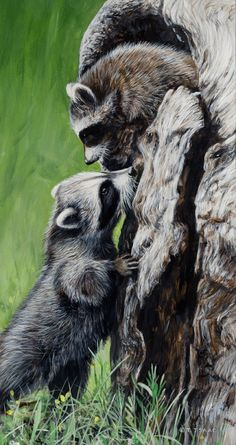 """Nose to Nose"" Original available through Ghost Bear Enterprises, Penticton, BC… Wildlife Paintings, Wildlife Art, Animal Paintings, Raccoon Art, Cute Raccoon, Racoon, Otter, Nature Artists, Cute Animal Videos"