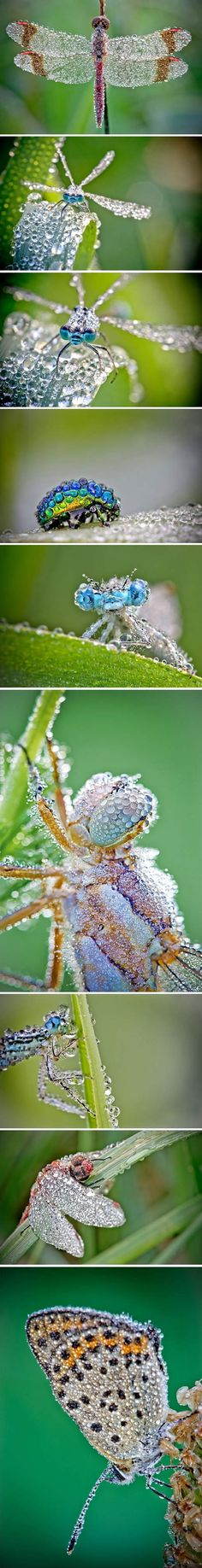 Insects with water drops