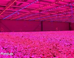 The future of food... with pink LEDs? PlantLab grows crops with 90% less water: ow.ly/9oqBx