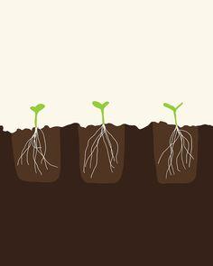 Fine Art Print  Transplanted Seedlings  May 31 2012 by joreyhurley, $80.00