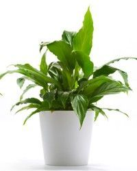 plants for office cubicle. 10 hard to kill plants for my indoor garden ironically i killed two african office cubicle t