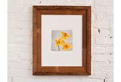 Liz Nichols, Daffodil on OneKingsLane.com