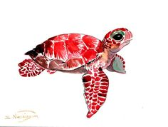 Sea Turtle, Original watercolor painting, 9 X 12 in, red purple turtle painting… Watercolor Sea, Watercolor Animals, Watercolor Paintings, Original Paintings, Animal Drawings, Art Drawings, Turtle Painting, Photo Art, Illustration Art