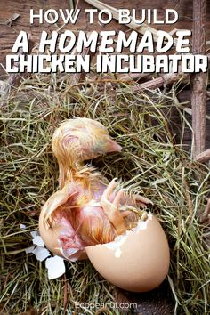 Looking For A Safe Place To Put Your Fertilized Chicken Eggs? You've Come To The Right Place! Check Out This Free Step By Step Guide To Building Your Own Chicken Incubator In 6 Easy Steps! Homemade Incubator, Diy Incubator, Chicken Incubator, Portable Chicken Coop, Best Chicken Coop, Building A Chicken Coop, Chicken Coops Homemade, Keeping Chickens, Raising Chickens