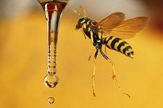 Wasp hovering by mazouz abdelaziz on 500px