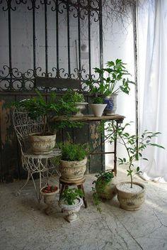 Plantsの画像:Antique Furniture demode10