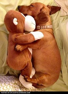 Jake has this monkey. I'm sure he'd love the pup, too.