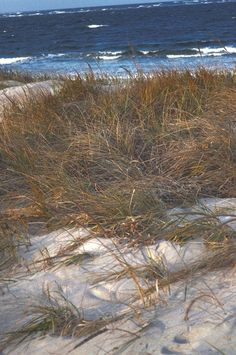 beach, winter | Kate Uhry Photography