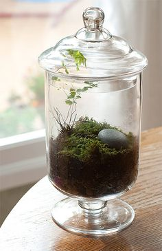 Watched a show a while ago about making terrariums so I've been on the lookout for a cool glass to make one and pray the life can sustain itself...