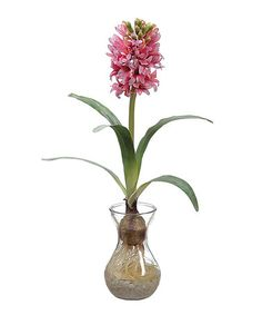 Another great find on #zulily! Cerise Hyacinth Bulb Arrangement #zulilyfinds