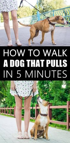 Do you want your dog to stop pulling on the leash? Dogs have a faster pace and walking nicely on a leash is not an instinctive behaviour. Use these 3 simple tips to train your dog to stop pulling on leash forever. Dog Hacks, Dog Behavior, Dog Training Tips, New Puppy, Dog Leash, Dog Walking, Dog Care, Border Collie, Animals And Pets