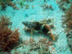 Foto Buceo OCEAN ADDICTS