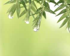 After the rain water droplets on leaves green wall by NewLeafPics, $25.00