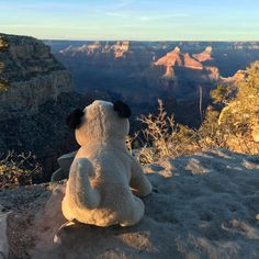 As the sun begins to set on Mr. Pug's first day at the Grand Canyon, he considers the vastness of the world he has yet to explore. And other super profound thoughts. ——————————————  #travel #world #pug #mrpug #canyon #grandcanyon #arizona #pugs #sunset #traveling #mrpug